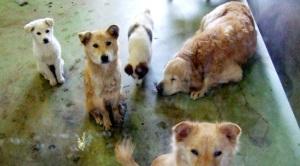 Foto von change.org